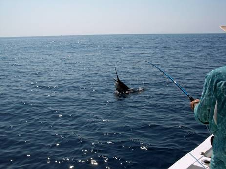 Sailfishing